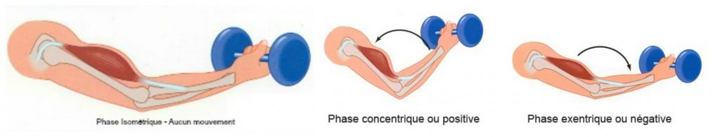 Pliométrie Contractions Musculaire