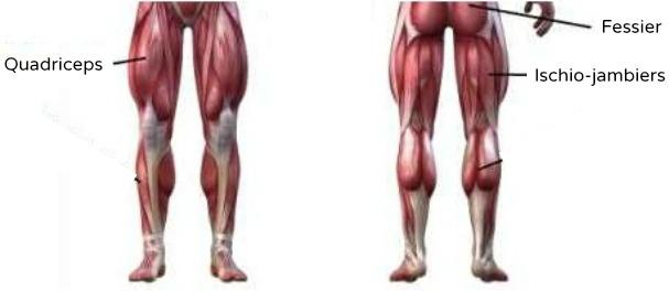 Pliometrie squat-muscles